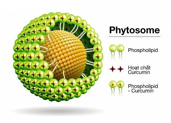 Cấu tạo cơ bản của Phytosome Curcumin (Meriva)