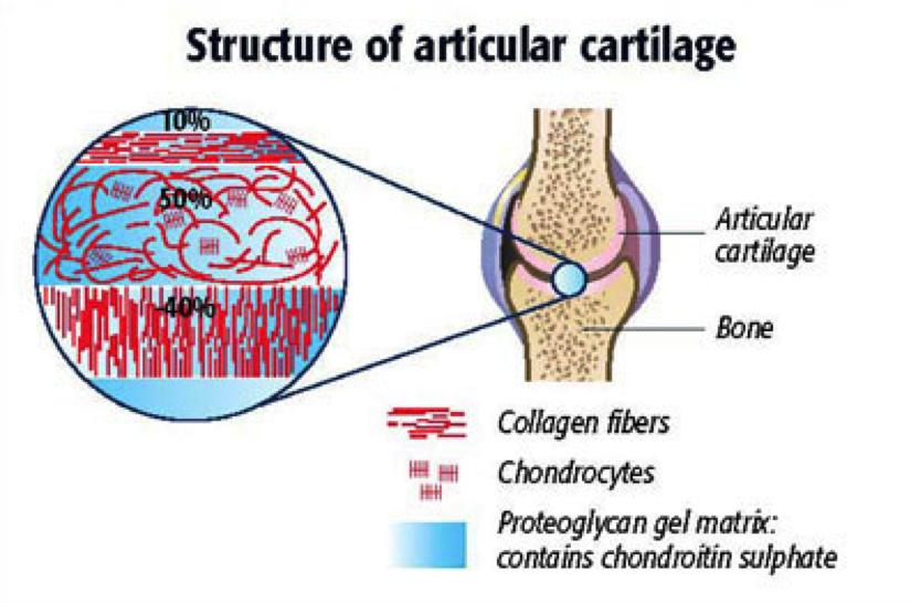 Những tác dụng đáng kinh ngạc của Chondroitin sulfate đối với sức khỏe-1