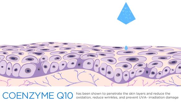 Coenzyme Q10 và những lợi ích chống lão hóa hiệu quả cho da