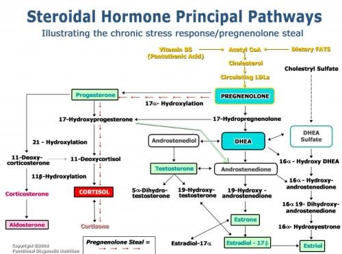 """Pregnenolone – Tiền hormone giúp """"bảo vệ tuổi xuân"""""""