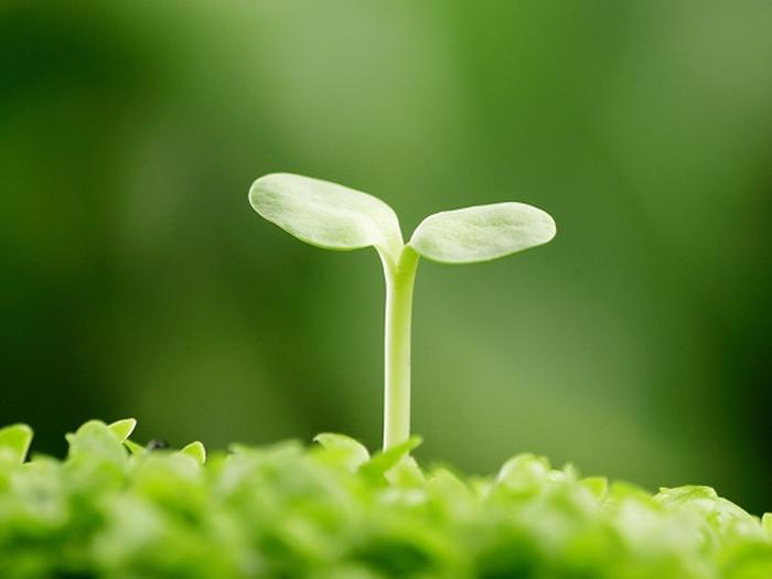 Các nghiên cứu về tác dụng của Tinh chất mầm đậu nành – Soy Isoflavone