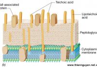 ImmunePath-IP® - Nguyên liệu tăng cường hệ miễn dịch