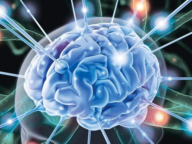 Chiết xuất rau đắng biển (Bacopa extract) tác dụng với hệ thần kinh