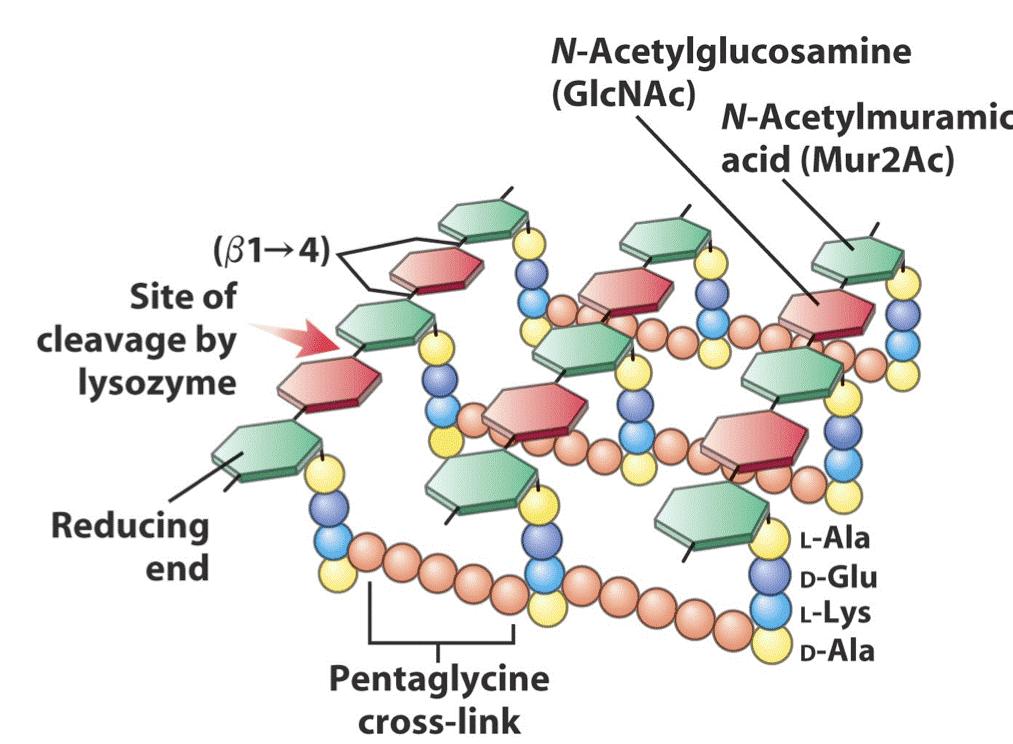 nguyên liệu tăng miễn dịch cho tpcn