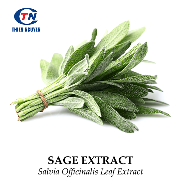 sage extract, salvia officinalis extract