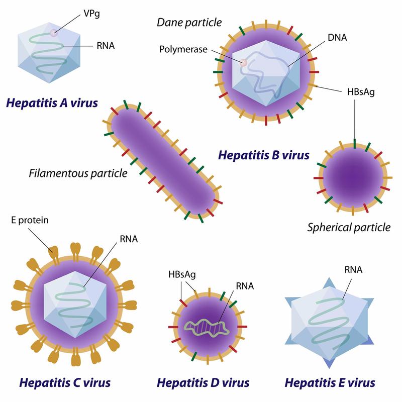 Các thể viêm gan virus