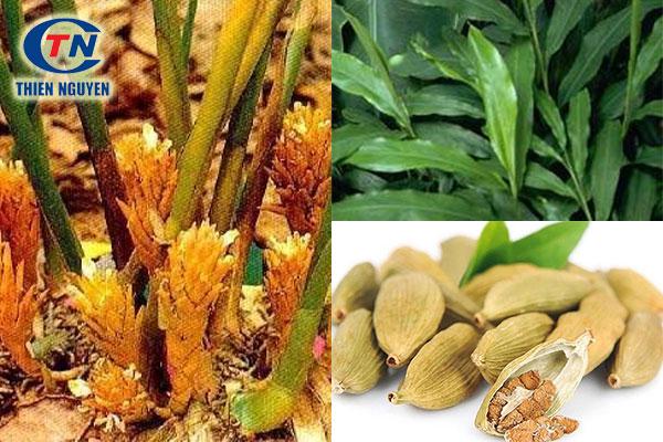 Cardamon seed extract, chiết xuất bạch đậu khấu