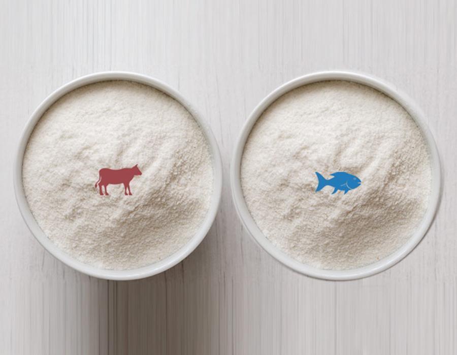 Nên dùng Collagen từ cá hay Collagen từ bò 1