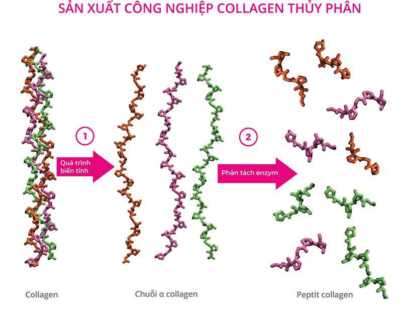 Collagen và những lợi ích với sức khỏe