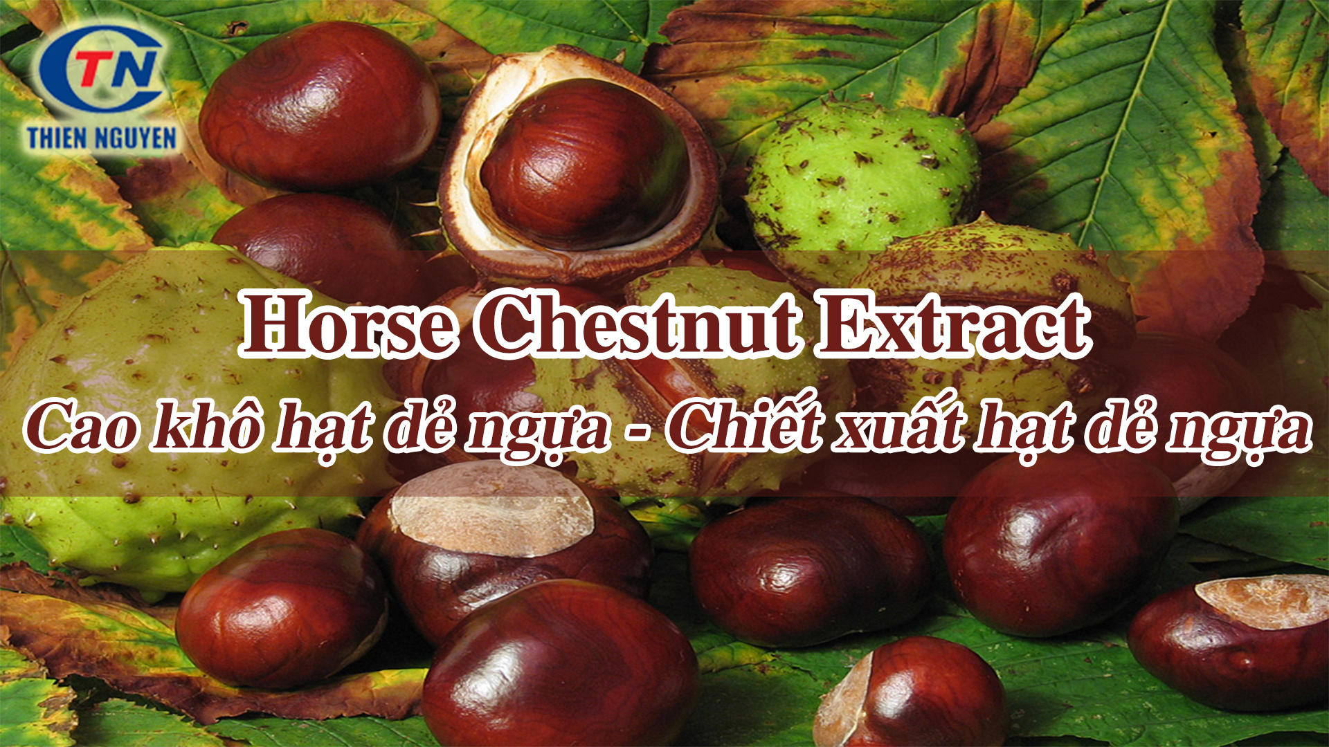 chiết xuất hat dẻ ngựa (cao hạt dẻ ngựa) horse chestnut extract