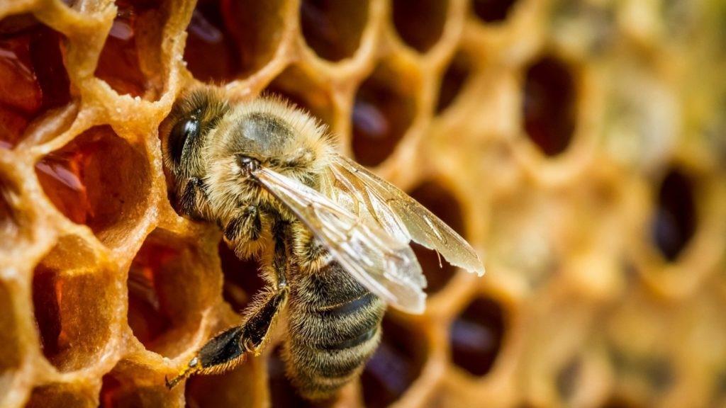 Keo ong được sản xuất như thế nào