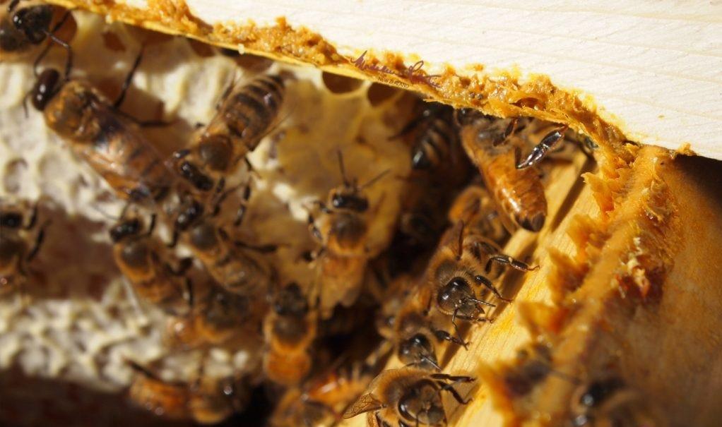 Keo ong tan trong nước lại được các dược sỹ đặc biệt chú ý