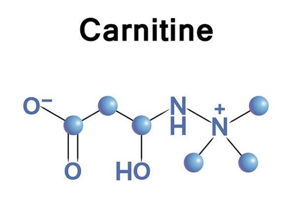 L-carnitine và những điều cần biết 1