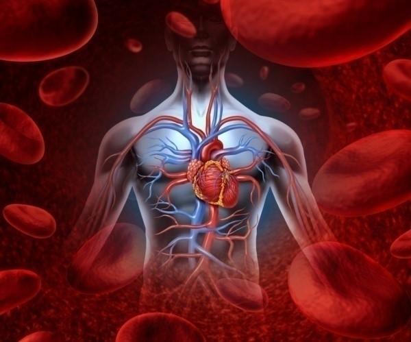 Tác dụng của L-Carnitine trong điều trị bệnh tim mạch