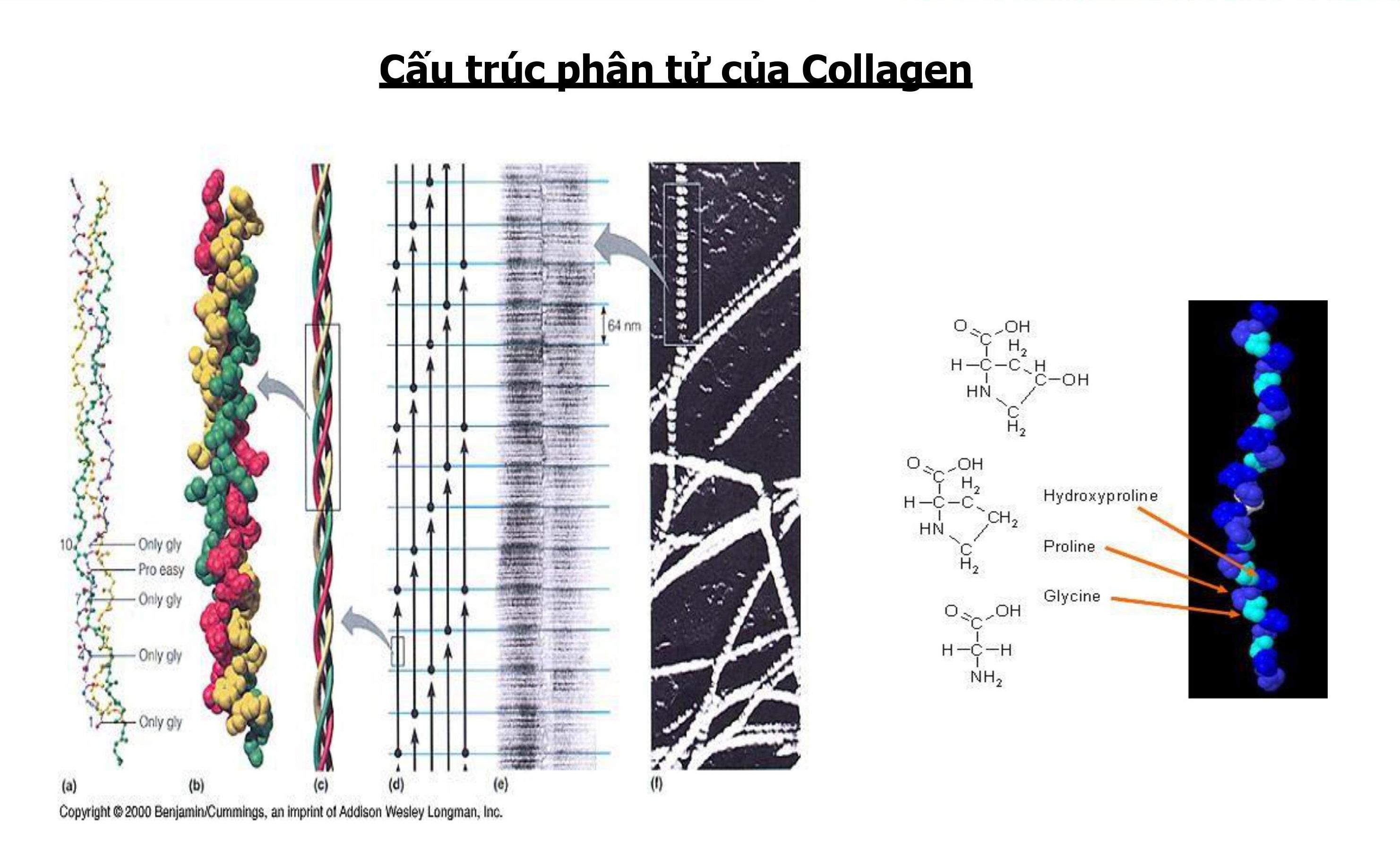 NanoCollagen - Nguyên liệu sản xuất TPCN mới