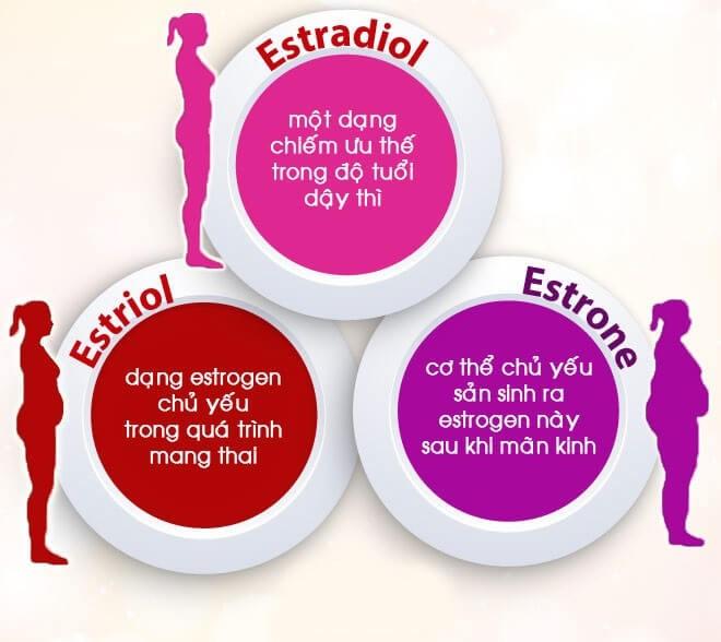 Estrogen là nội tiết tố cơ bản được sản xuất từ buồng trứng