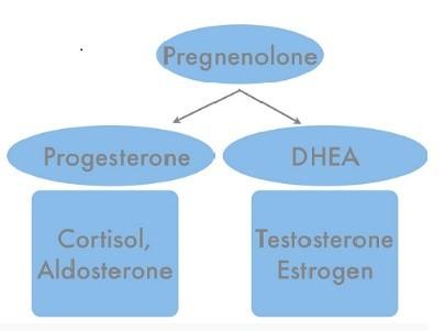 Pregnenolone giúp cơ thể khỏe mạnh