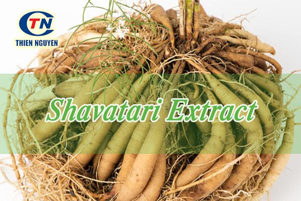 mua chiết xuất thiên môn chùm shavatari extract