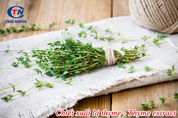 tác dụng của chiết xuất cỏ xạ hương Thyme extract